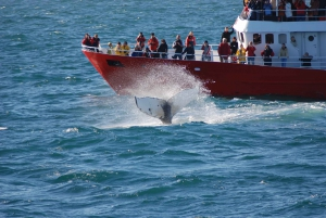 From Golden Circle and Whale Watching Tour