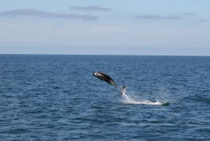 From Reykjavik: Express Whale Watching Tour by RIB