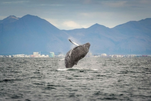 From Reykjavik: Whale Watching Tour by Speedboat