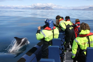 From Whale Watching Tour by Speedboat