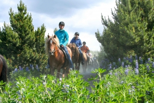 Icelandic Horse Riding Tour in Lava Fields