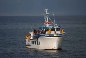 Icelandic Sea Fishing from Reykjavik