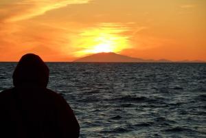 Midnight Sun Whale Watching Tour
