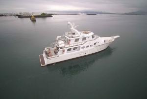 Reykjavik: 3-Hour Luxury New Years Fireworks Midnight Cruise