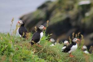 Reykjavik: 3-Hour Sea Angling Gourmet Experience Tour