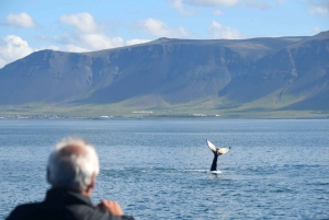 Reykjavik: Half–Day Whales and Puffins Combo Tour