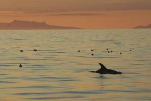 Reykjavik: Midnight Sun Whale Watching Tour