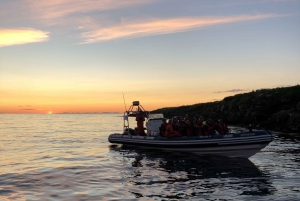 Reykjavik: Premium Whale and Puffin Watching Evening Tour