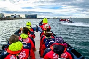 Reykjavik: Premium Whale Watching with Flexible Ticket