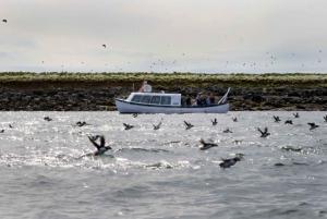 Reykjavik: Puffin Watching Boat Tour
