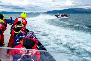 Reykjavik: Puffin Watching Tour
