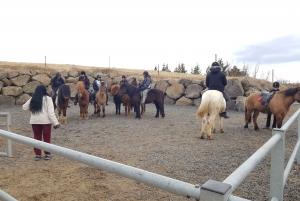 Reykjavik: Red Lava Horse Riding Tour