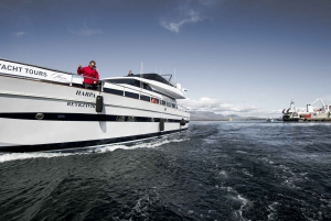 Reykjavik: Small-Group Whale Watching Cruise