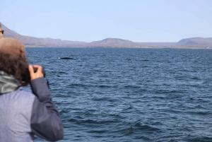 Reykjavik: Whale Watching Excursion