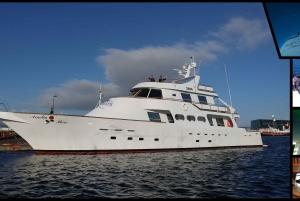 Reykjavík: Whale Watching from a Luxury Yacht