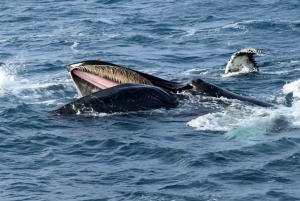 Reykjavik: Whale Watching + Whales of Iceland Exhibition