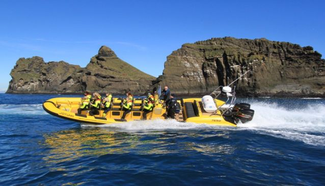 Rib Safari in the Westman Islands