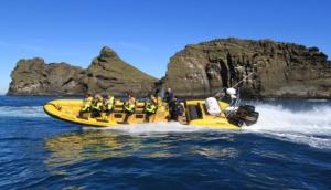 Rib Safari in the Westman Islands