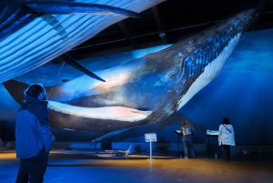 Whale Watching + Whales of Iceland Exhibition