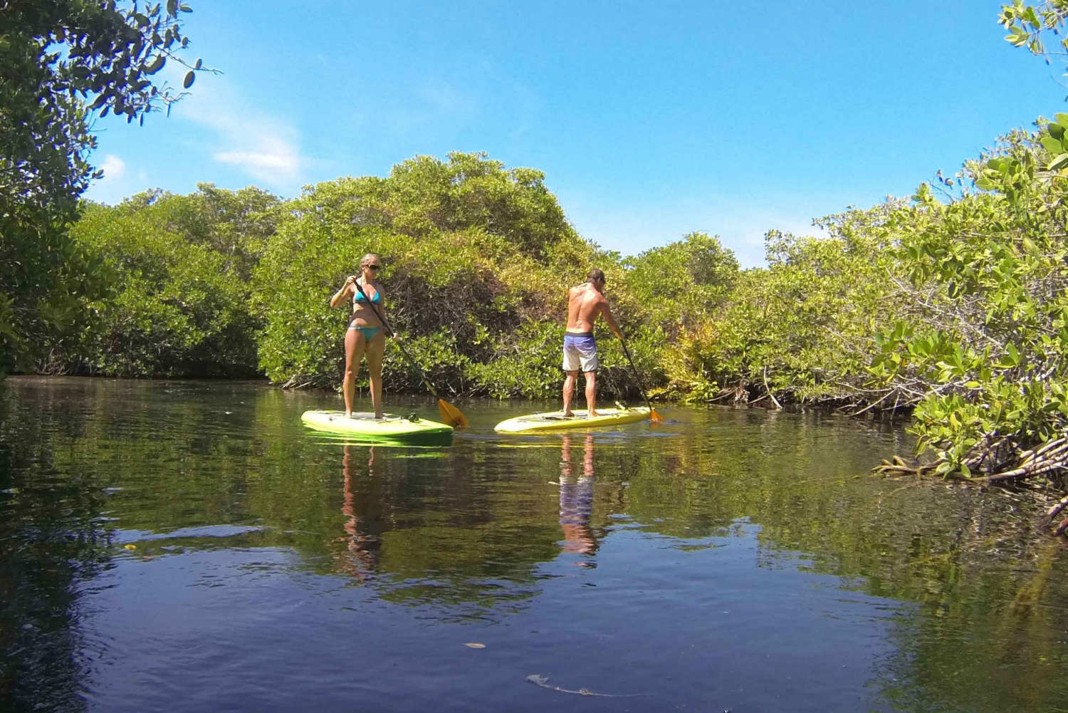 Cenote River: Snorkeling & Paddleboarding Tour
