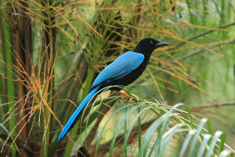 Private Bird Watching in Cancun