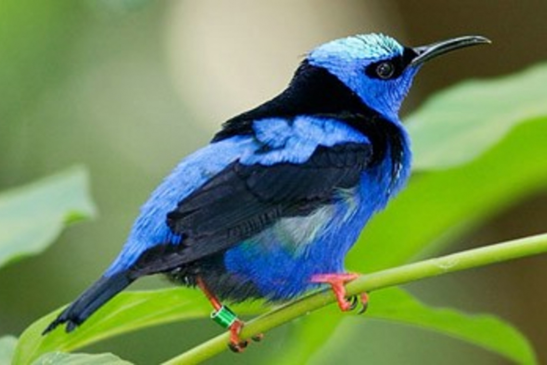 Puerto Morelos 4-Hour Bird Watching Tour