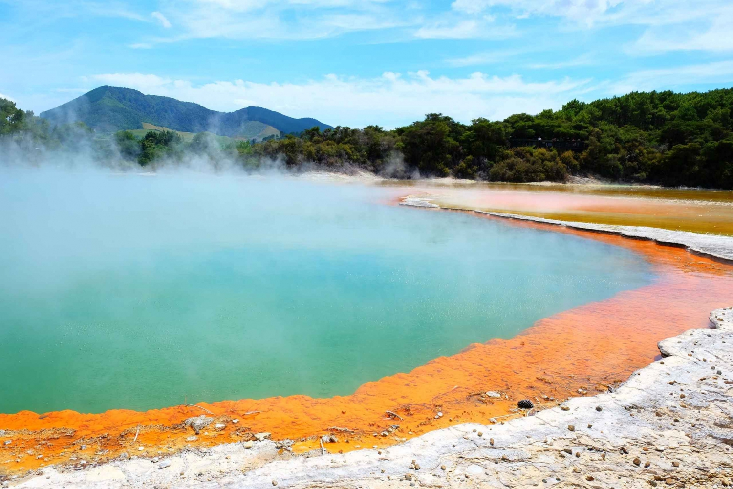 Auckland to Rotorua Small Group Tour