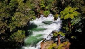 Okere Falls
