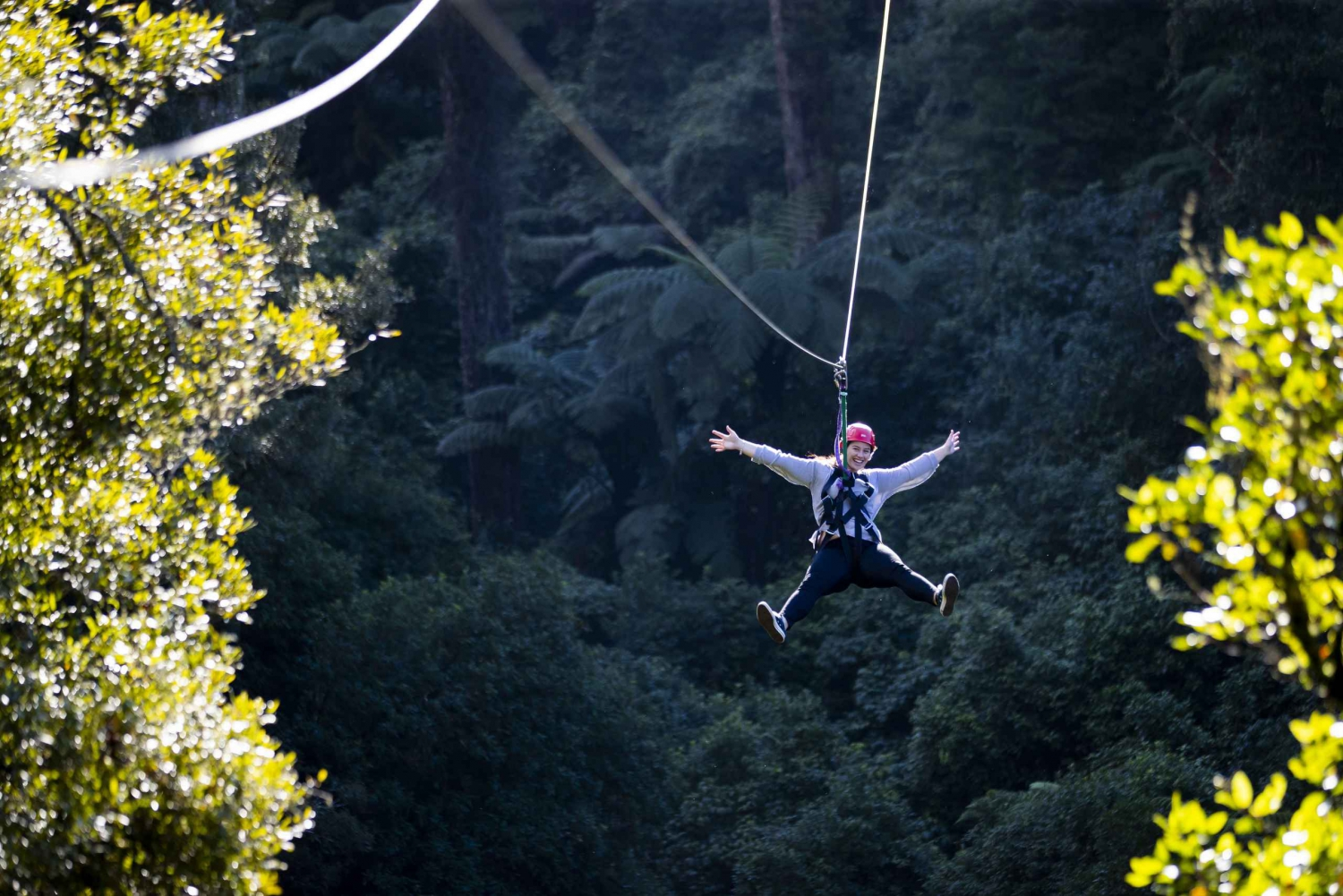 Ultimate Zipline Forest Canopy Tour