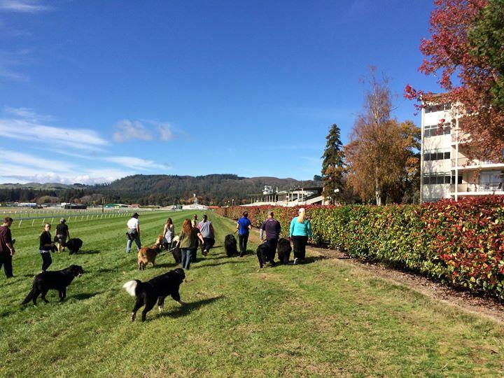 Rotorua Races