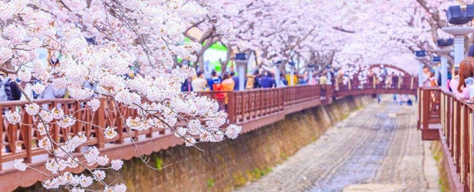 Jinhae Cherry Blossom Festival 2020 & Gyeongju Bike Tour