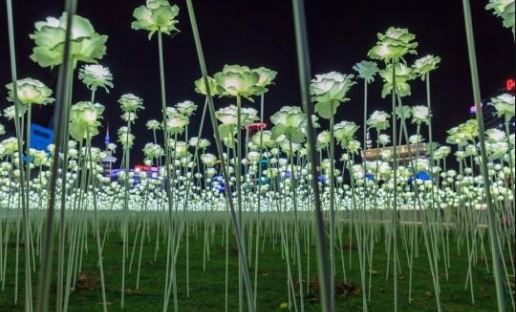 LED Flower Garden at the DDP