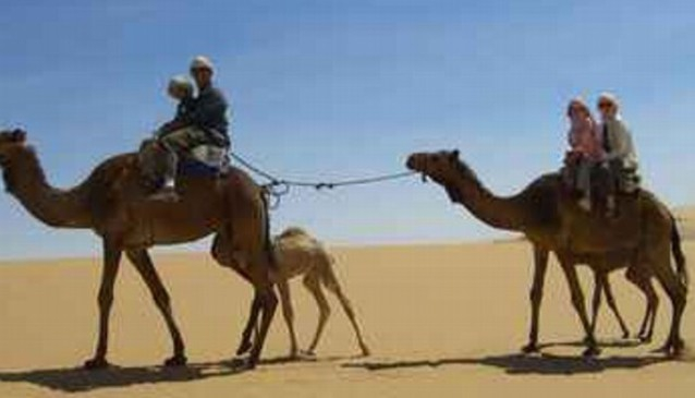Camel Safari with Bedouin Dinner