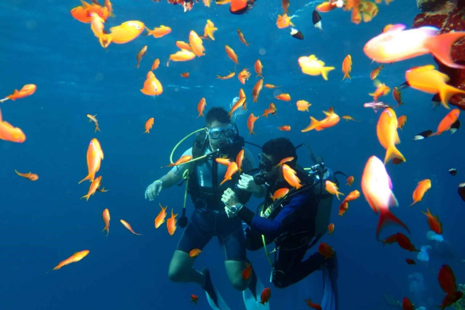 From Sharm-El-Sheikh: Ras Mohamed National Park Diving Trip