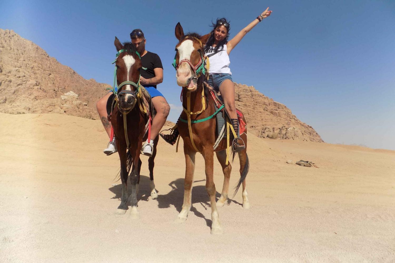 Horse Ride in Sharm El Sheikh Desert: Day Trip