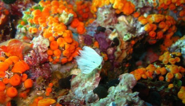 Diving center posidonia blu in sicily my guide sicily - Dive center blu ...