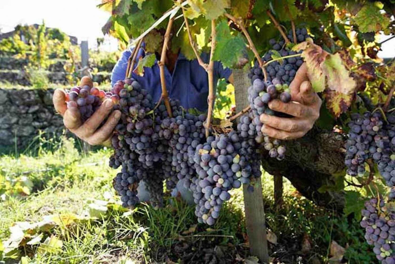 Etna 4×4 Wine Tour