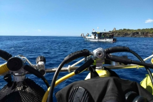 Etna & Sea with Snorkeling from Catania