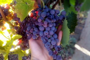 From Taormina: Etna Wineries Small Group Tour