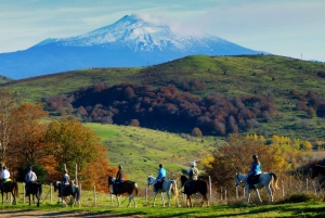 Horseback Riding and Farmhouse Tour with Lunch