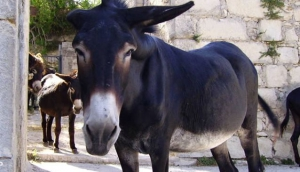 Il Passo dell'Asino - The Pace of the Donkey