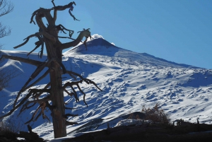 Mount Etna: Craters of The 2002 Eruption Trekking Excursion