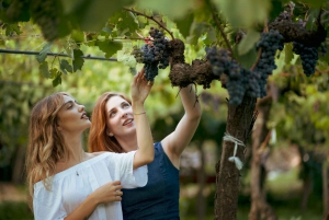 Private Multi-Day Sicily Food & Wine Lovers Tour: 8 Days