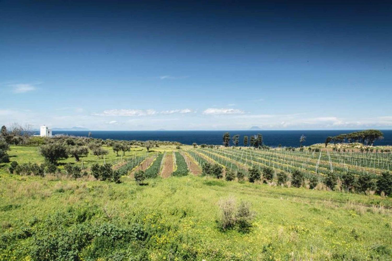 Private Wine Tour & Tasting on the Mediterranean Sea