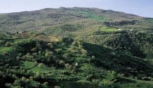 Riserva Naturale Bosco della Favara e Bosco Granza