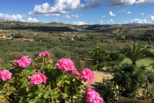 Sicily: Horseback Riding and Farmhouse Tour with Lunch