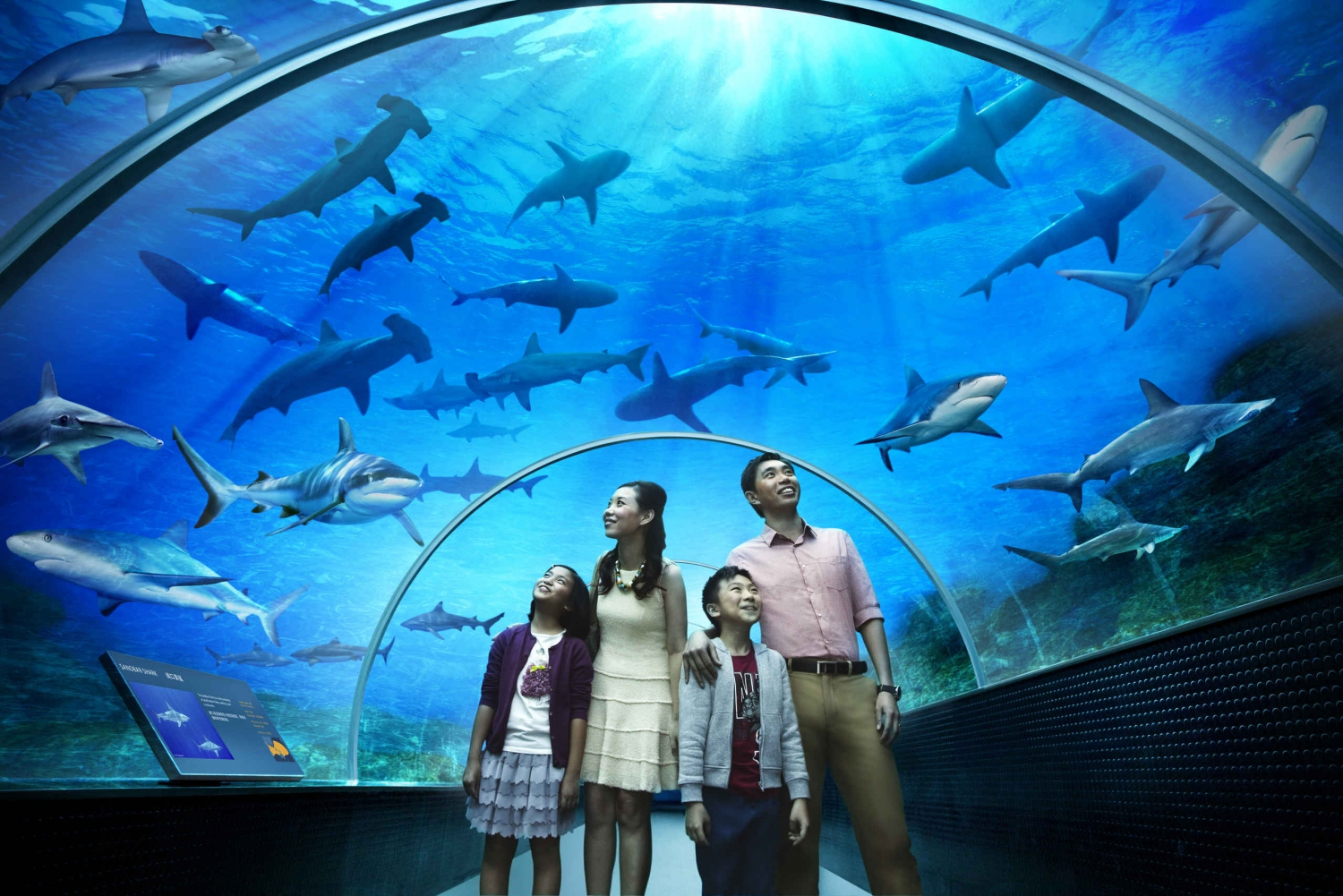 Combo Ticket: S.E.A Aquarium & Skyline Luge Sentosa