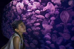 Go Singapore Explorer Pass: 2, 3, 4, 5, 6 or 7 Attractions