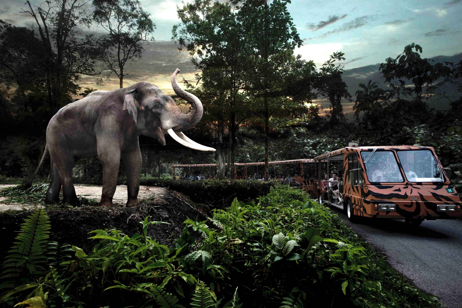 Night Safari Ticket, Priority Tram Ride & Return Transfer