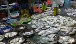 Senoko Fishery Port